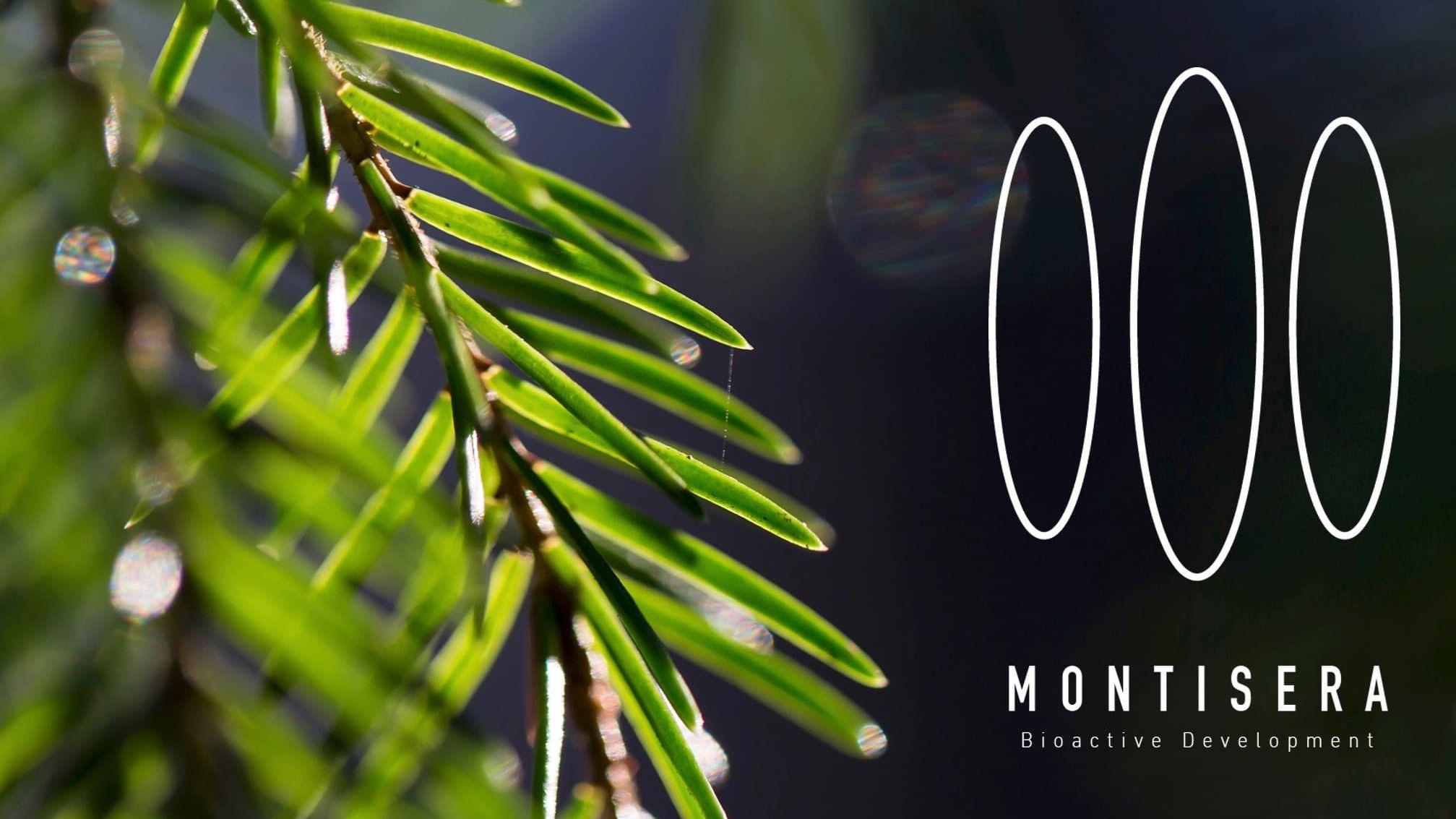 Montisera_Patents_Trademarks_16x9