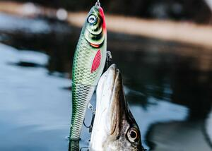 Rapalan innovatiiviset ja patenttisuojatut uistimet kiinnostavat kaloja ja kalastajia