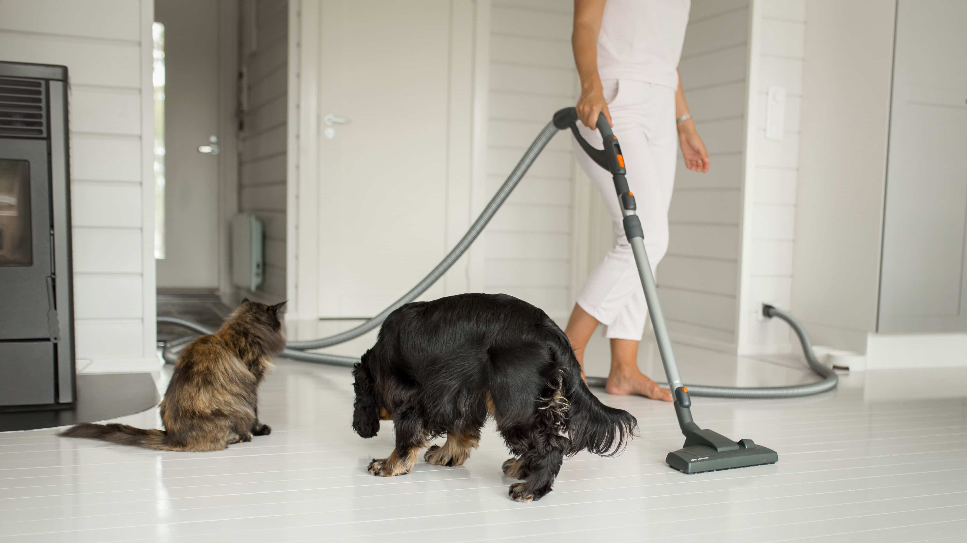 Allaway_kissa ja koira siivouspuuhissa_8427_16x9