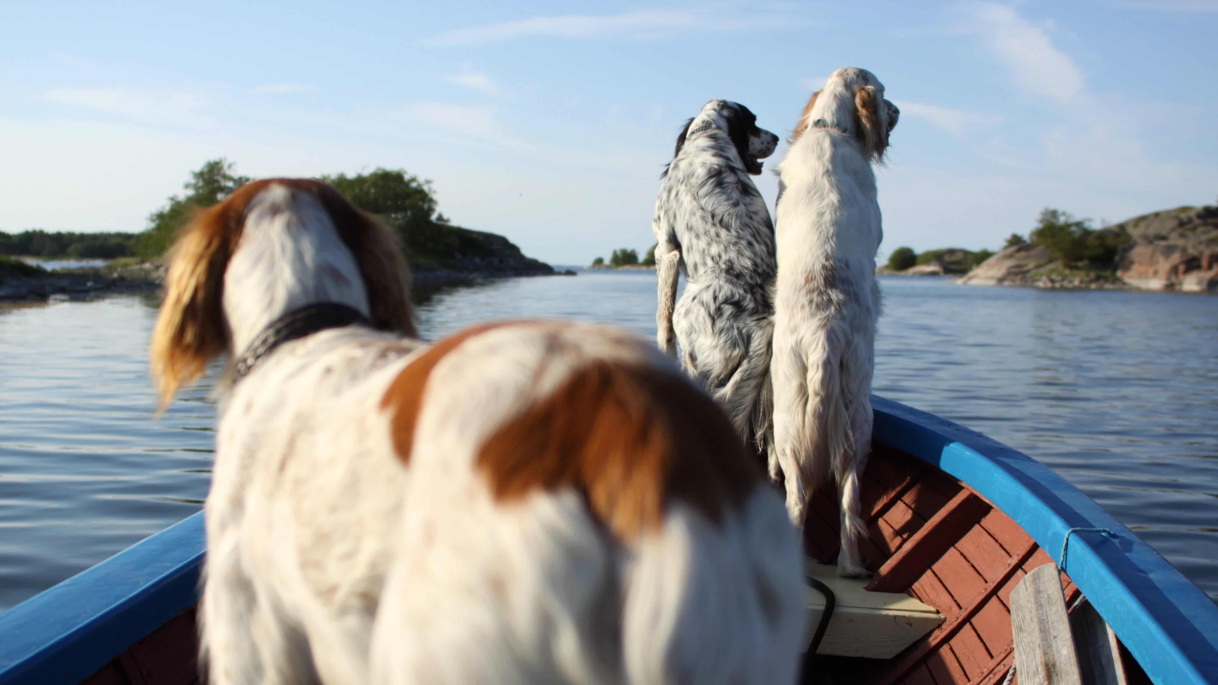 Dagsmark Petfood_Koirat veneessä